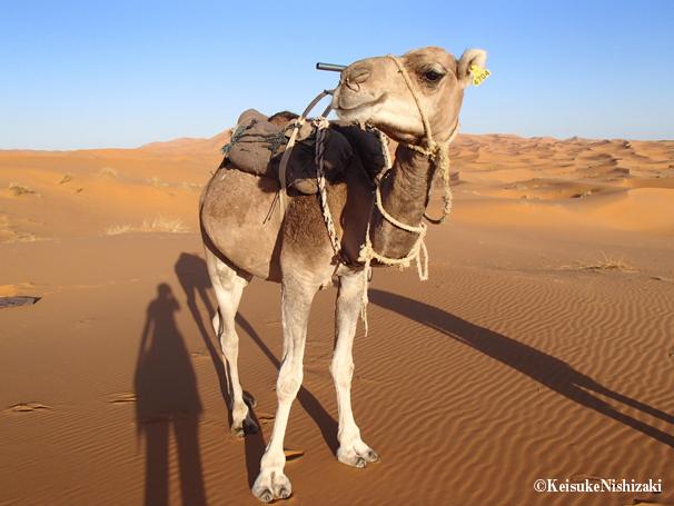 砂漠での大事な相棒。この子は照れ屋さんだけど、少々荒っぽい性格